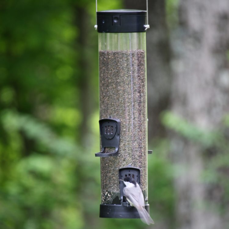 chickadee on Stokes Select small easy fill plastic tube feeder
