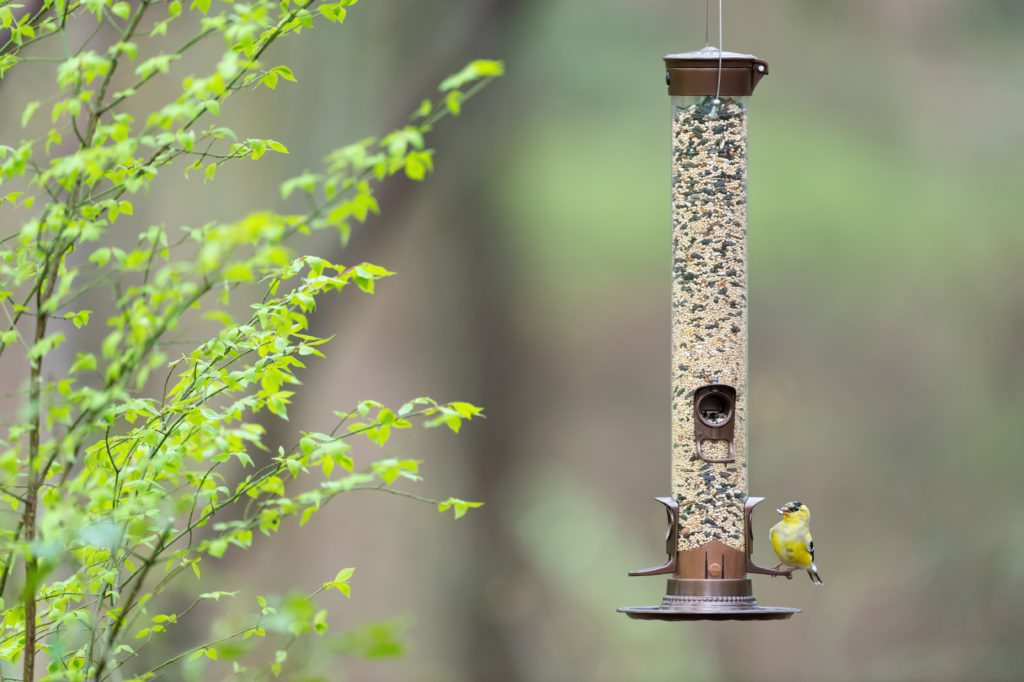 goldfinch eating from Stokes Select Metal Mixed Seed Bird Feeder