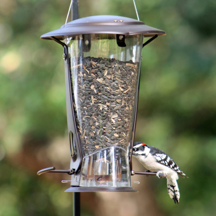woodpecker on Squirrel-X2 squirrel resistant feeder