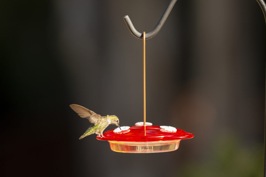 hummingbird feeding from More Birds 3-in-1 hummingbird feeder hanging option