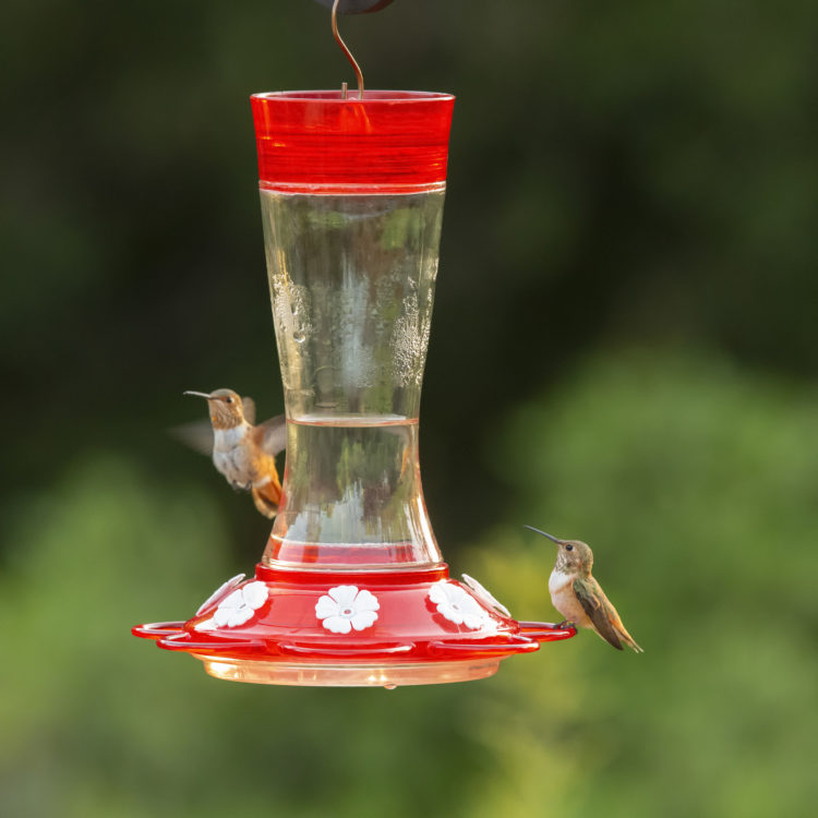 hummingbirds feeding from More Birds garnet hummingbird feeder