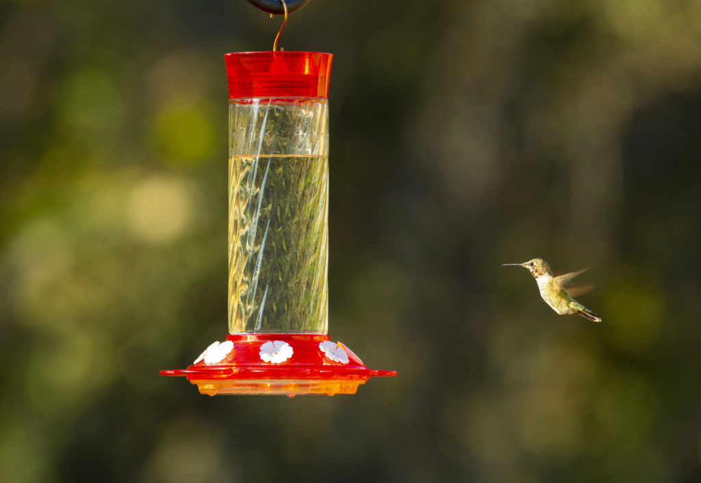 Diamond Hummingbird Feeder with hummingbird
