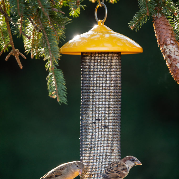 house sparrows eating from Finch Screen Feeder
