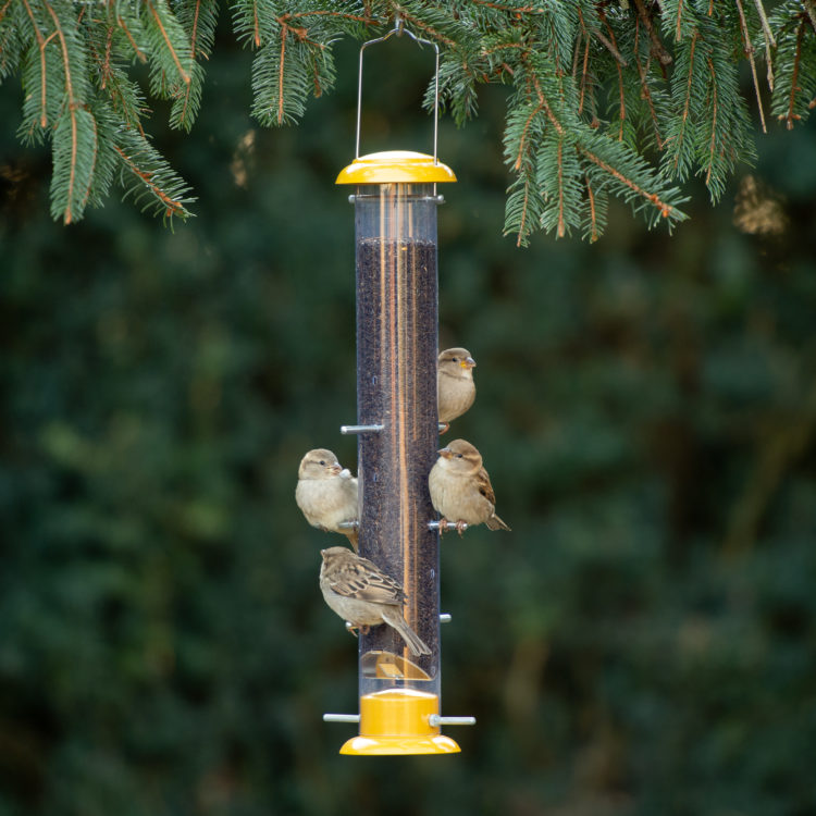 white-crowned sparrows eating from Stokes Select Topsy Tails Finch Feeder