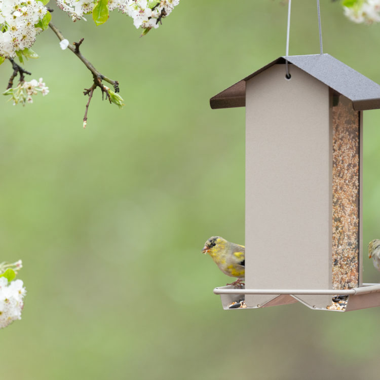 goldfinches feeding from Stokes Select Small Hopper Bird Feeder