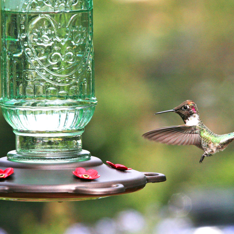 hummingbird flying to More Birds hummingbird vintage feeder in green