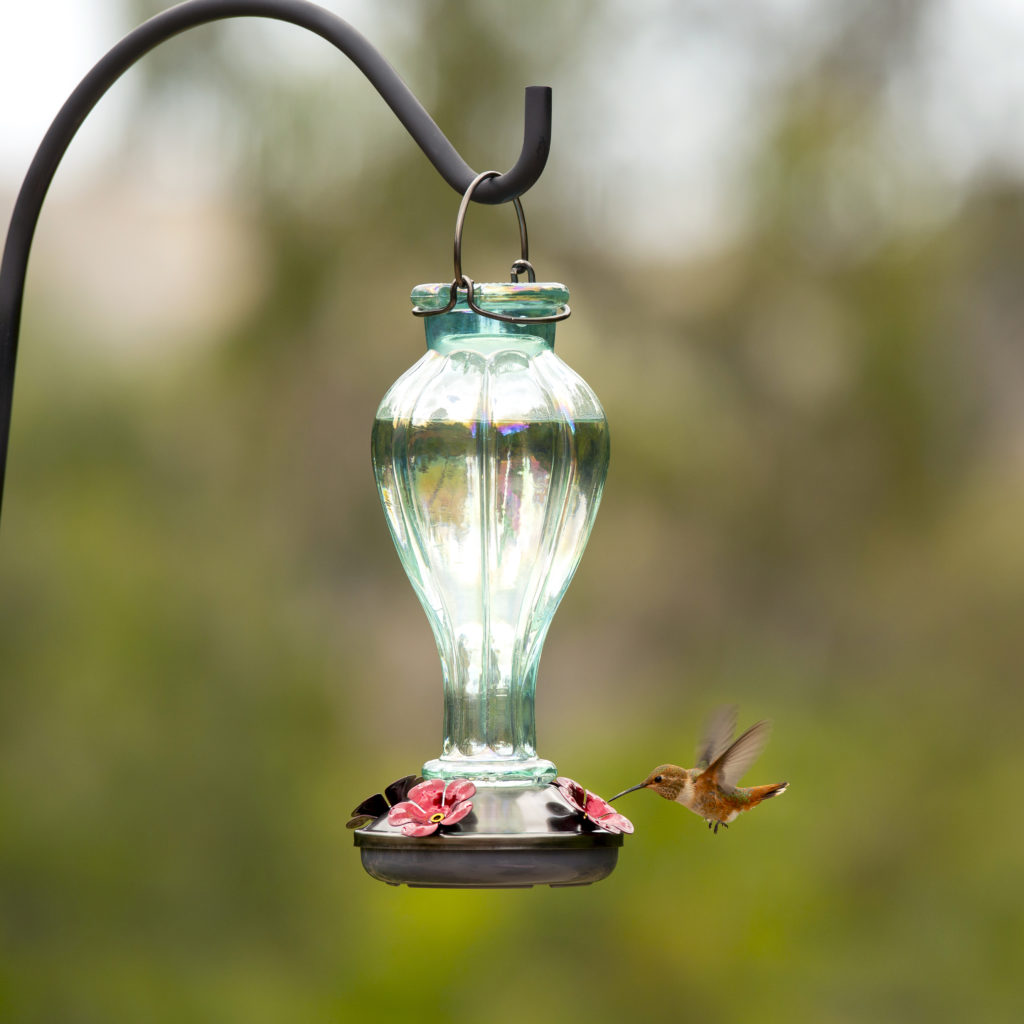 candy blossom hummingbird feeder with hummingbird