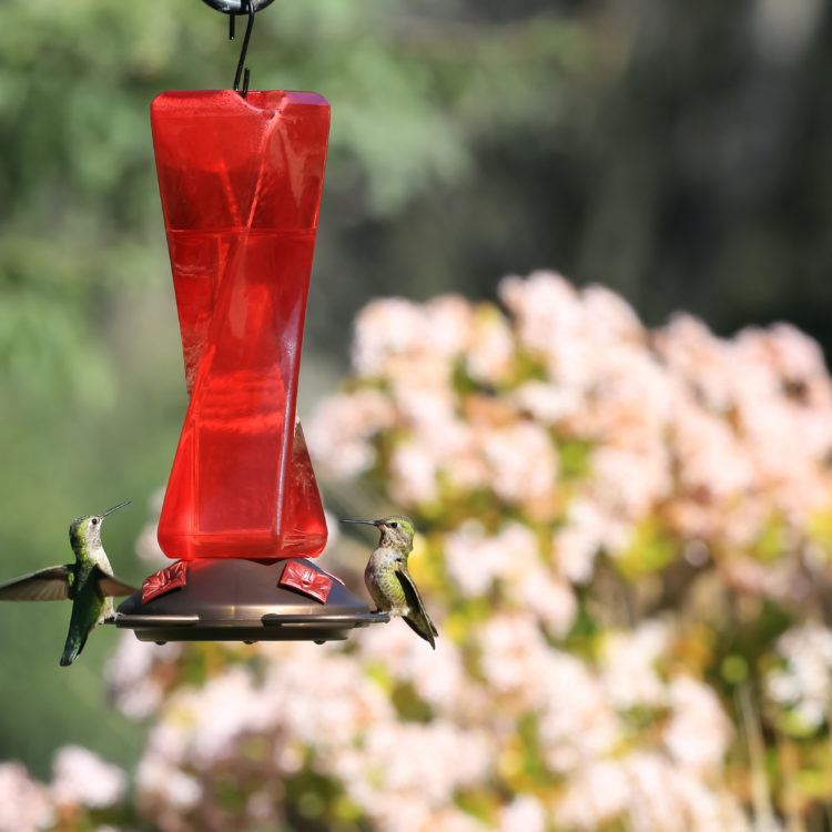 two hummingbirds feeding from Mirage Hummingbird Feeder in garden