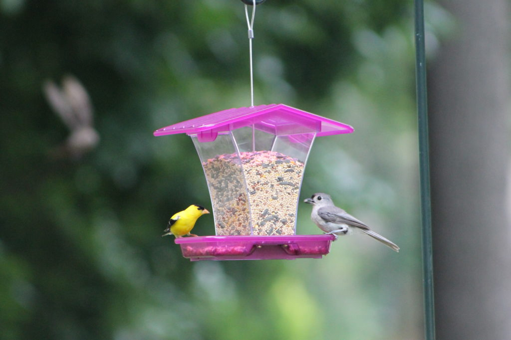 goldfinch and tufted titmouse on purple Stokes Select plastic hopper feeder