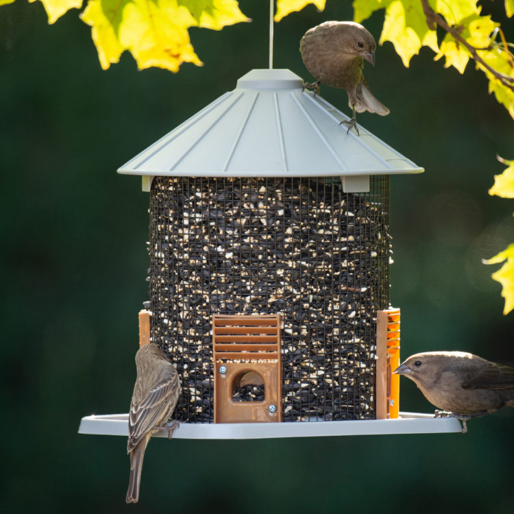 house finch and Northern Mockingbirds eating from Sunflower Crib Feeder