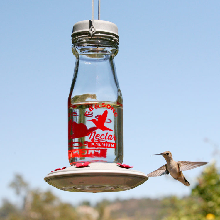 hummingbird flying to More Birds Jersey Hummingbird Feeder
