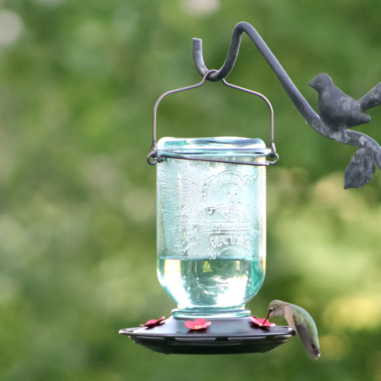 hummingbird on More Birds Mason Jar Hummingbird Feeder