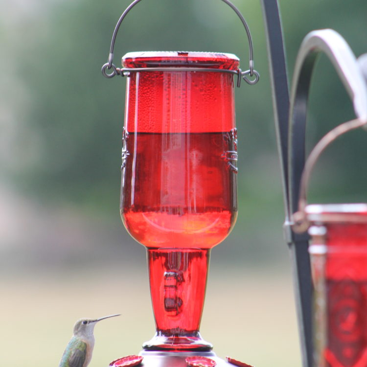 hummingbird on More Birds jug hummingbird feeder