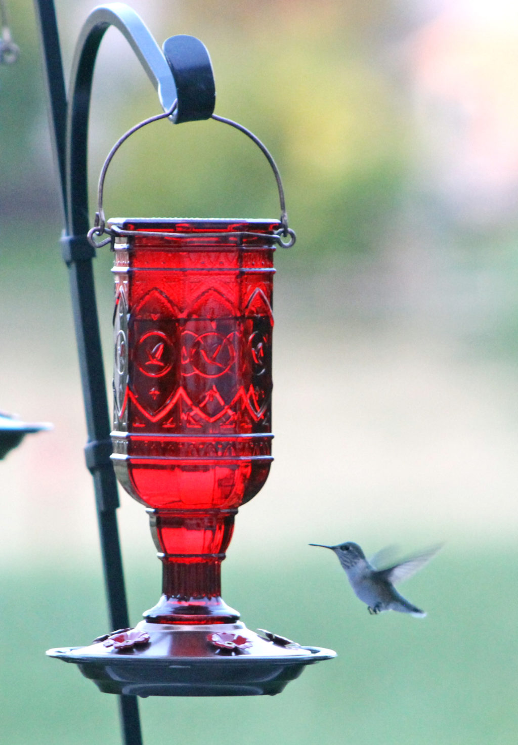 hummingbird flying toward More Birds red jewel hummingbird feeder