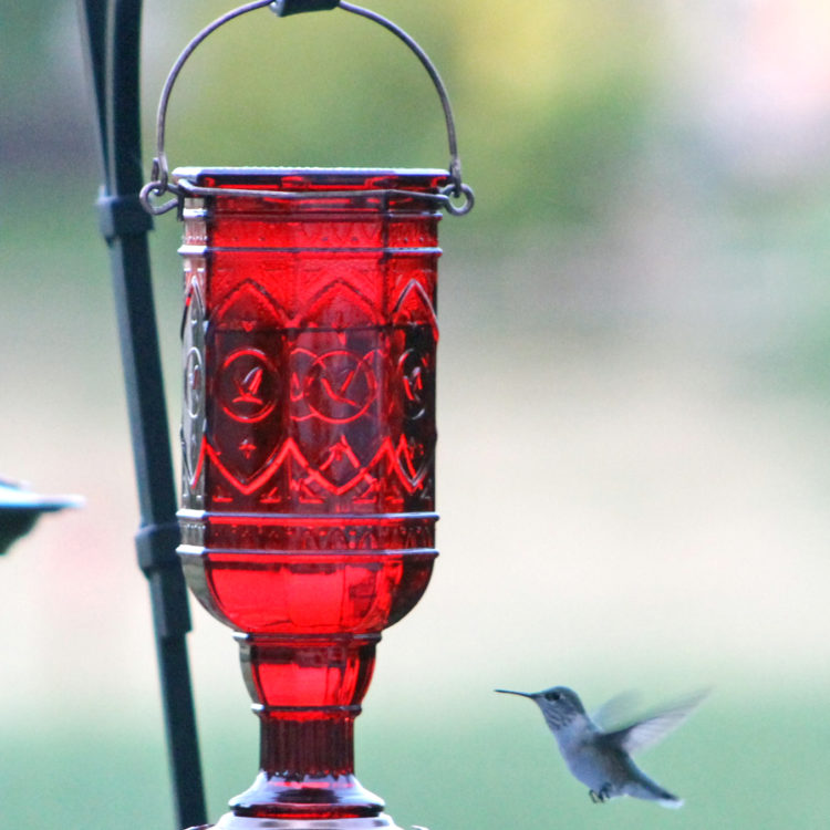 More Birds jewel red hummingbird feeder with hummingbird