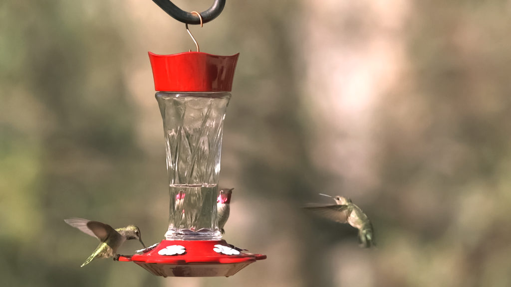 More Birds Twist Hummingbird Feeder with hummingbirds