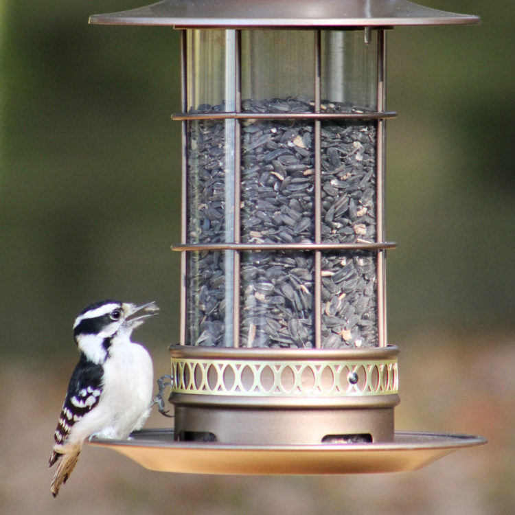 woodpecker on Stokes Select trellis lantern seed feeder