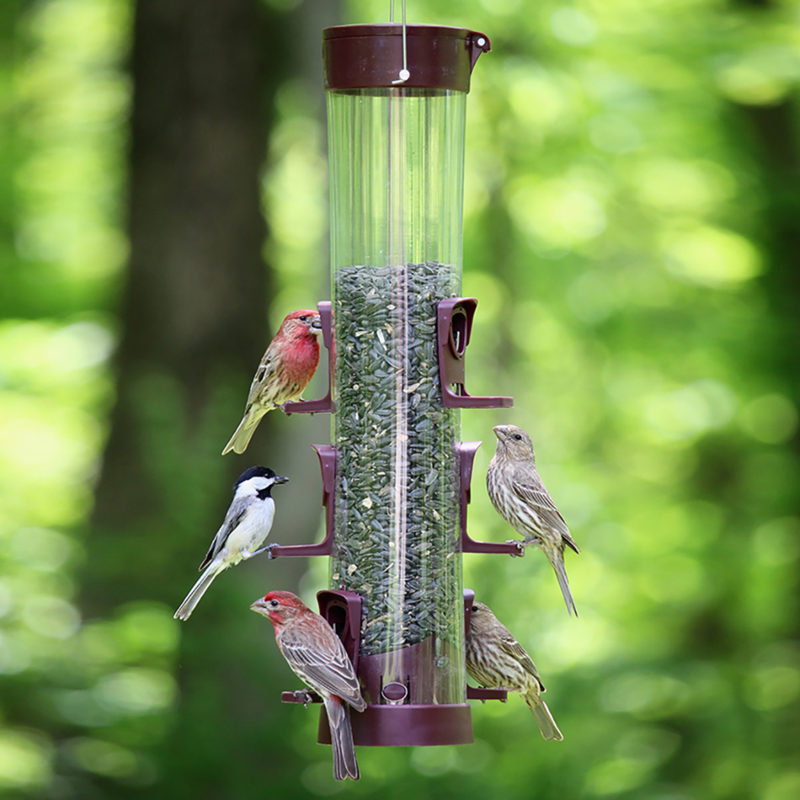 house finches and chickadee on Stokes Select large easy fill plastic tube feeder