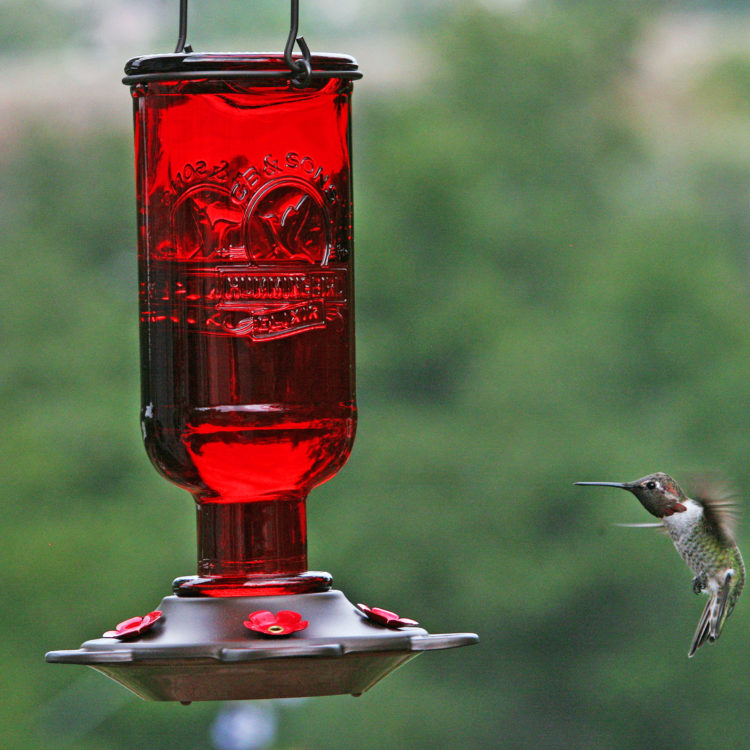 More Birds elixir hummingbird feeder with hummingbird