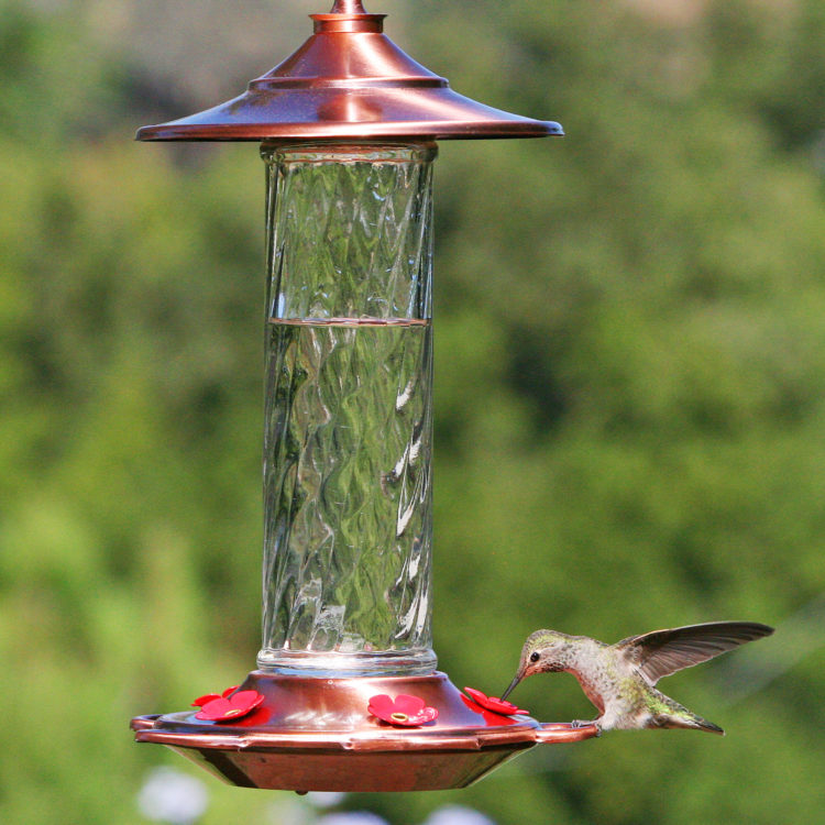 hummingbird feeding from More Birds glory hummingbird feeder