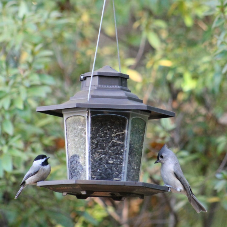 chickadee and tufted titmouse feeding from Stokes Select small lantern bird feeder
