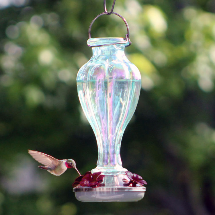 More Birds Candy Blossom Hummingbird Feeder with hummingbird