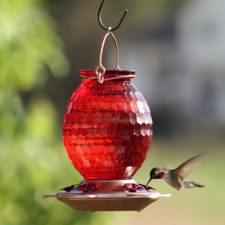 More Birds Gem Hummingbird Feeder with hummingbird