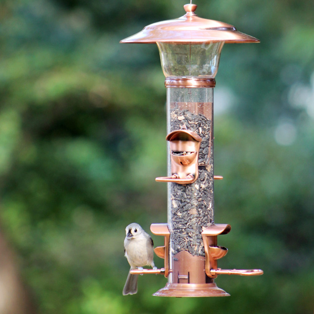 tufted titmouse on Stokes Select radiant seed feeder