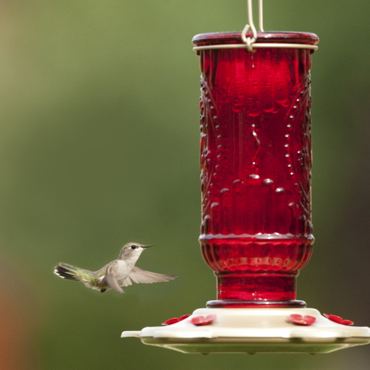 hummingbird flying to More Birds red vintage hummingbird feeder