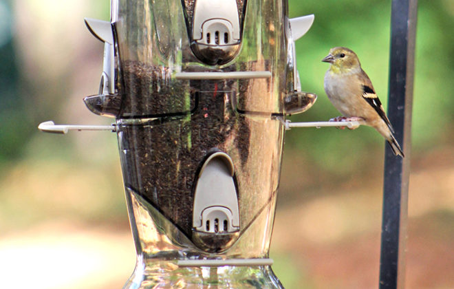 goldfinch on Stokes Select Abundance bird feeder