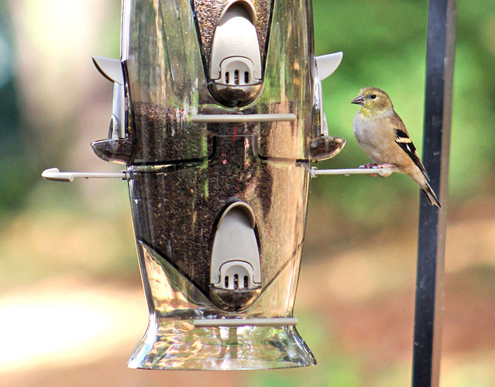 Stokes Select Abundance bird feeder