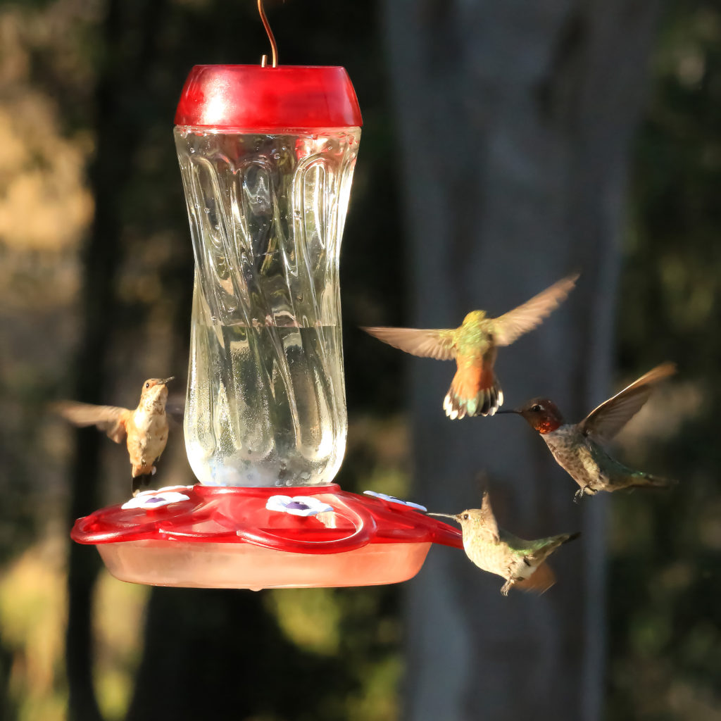 hummingbirds flying to More Birds Orion Hummingbird Feeder