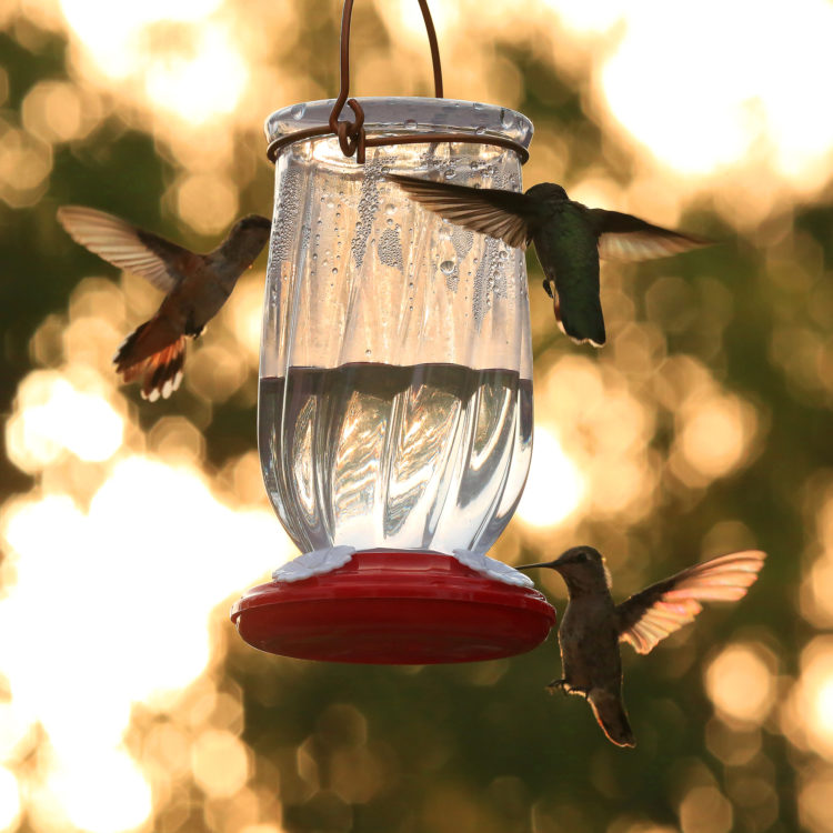 More Birds Tulip Hummingbird Feeder with hummingbirds