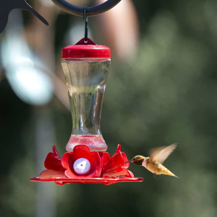 impatiens hummingbird feeder with hummingbird