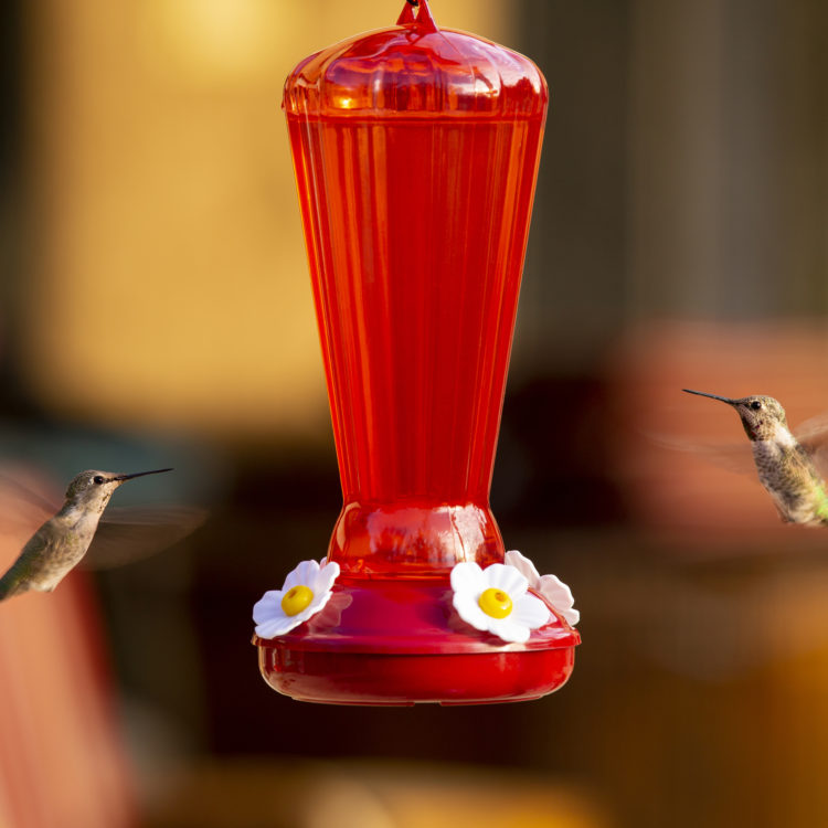 hummingbirds at Hollyhock hummingbird feeder