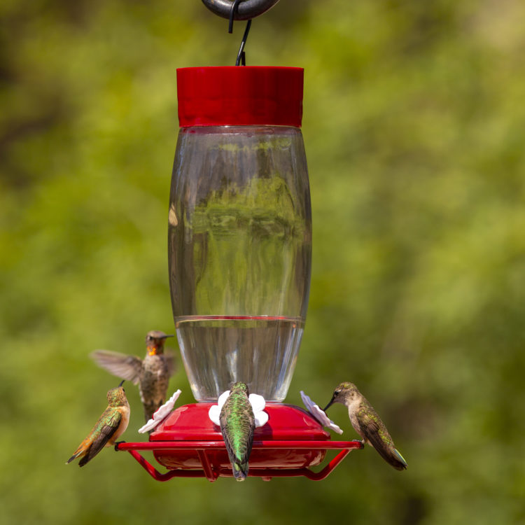 hummingbirds feeding from Deluxe Hummingbird Feeder