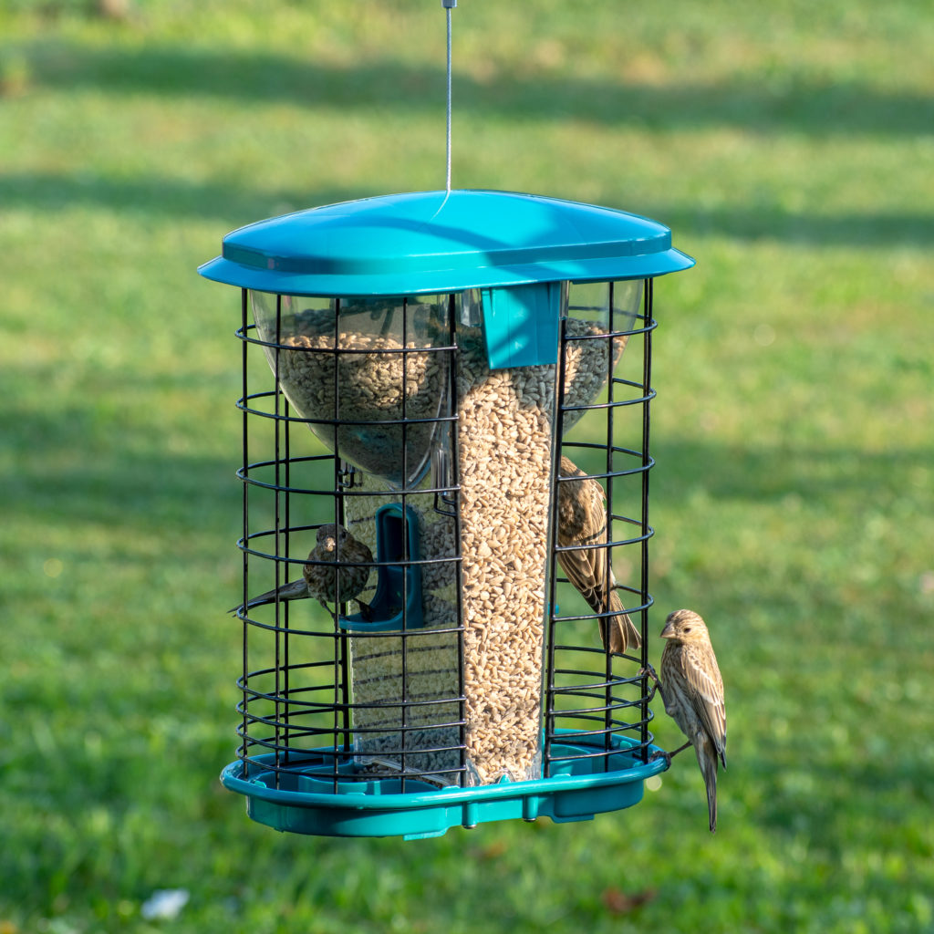 house finches eating from Squirrel-X Squirrel-Resistant Hopper Feeder
