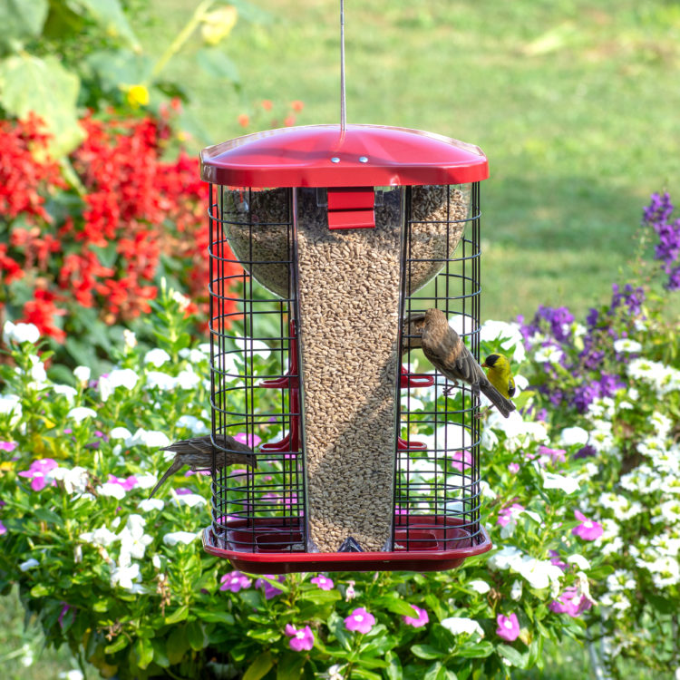 goldfinch and house finches eating from Squirrel-X Jumbo Squirrel-Resistant Hopper