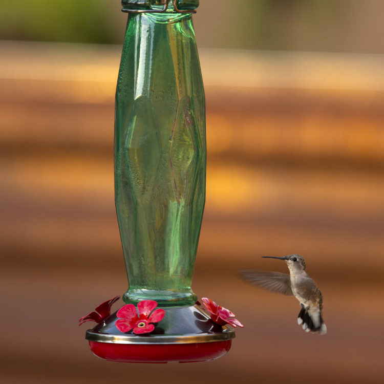 hummingbird at Emerald Prism Hummingbird Feeder