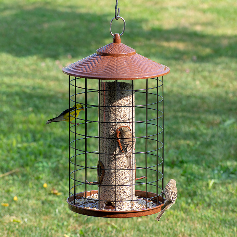 goldfinch and house finches eating from Squirrel-X Grande Squirrel-Proof Feeder