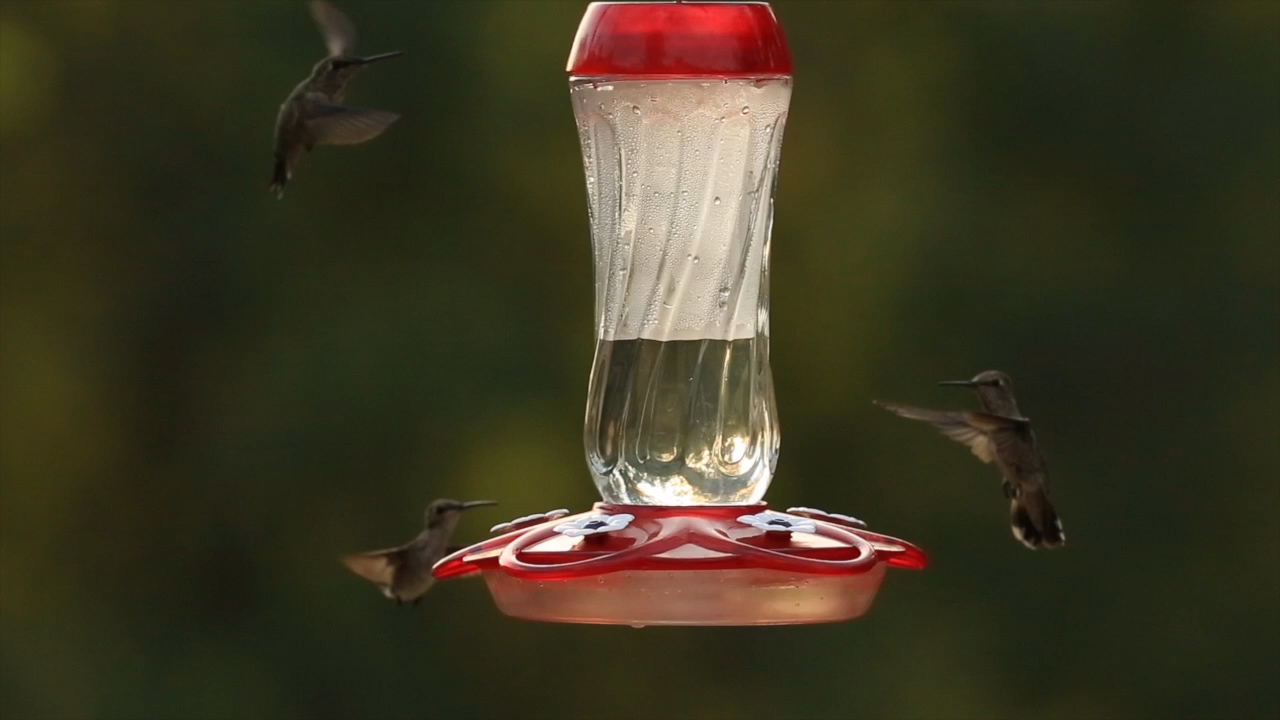 hummingbirds feeding from Orion Hummingbird Feeder