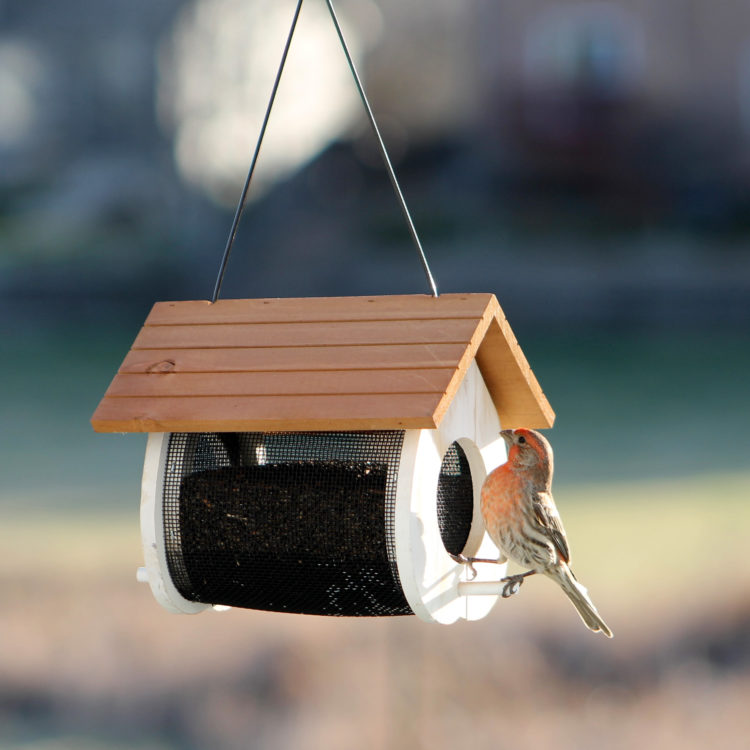 house finch eating from Stokes Select Cute Cling Wood Feeder